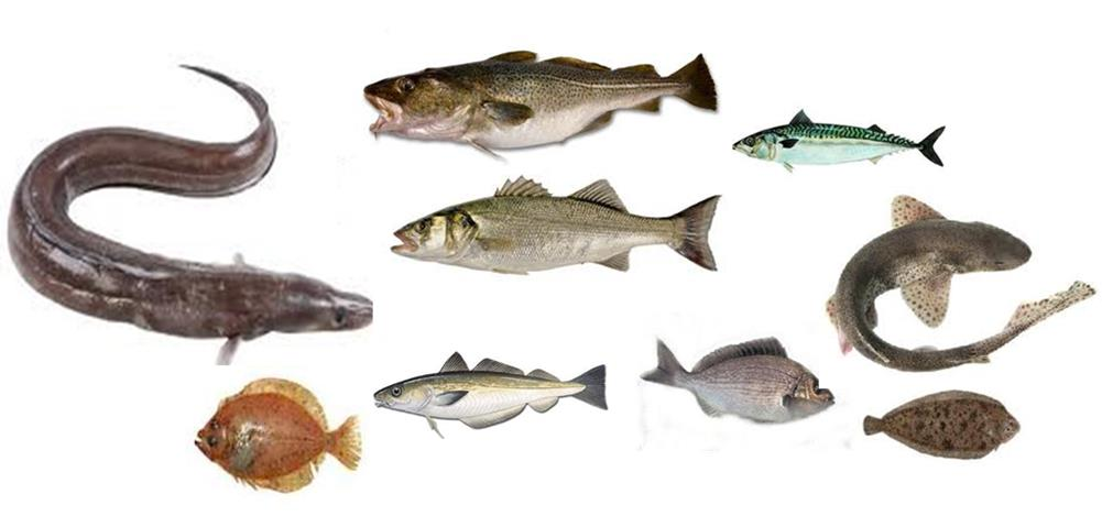 fishspecies